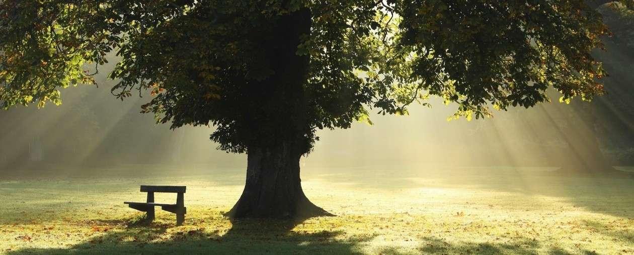sztuczne drzewo